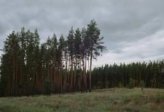 Граница леса / Edge of the forest