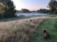Chippy enjoying a cool walk early this morning.