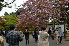 I decided to bite the bullet and take a taxi to Shinjuku Gyoen (Garden)