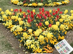 A closer view of the colourful flower bed