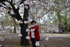 The red of the tourist contrasts beautifully with the white of the sakura