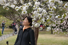 Low hanging sakura (cherry blossom) meant many selfie seekers!