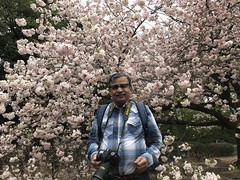 A selfie amidst lush pink sakura- well past their peak blooming time