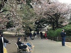 Time to move on after my mini 'Hanami' (sakura viewing) session