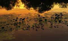 Lake Redington Reflections