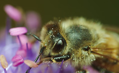A pollinator at work