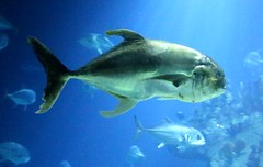 The Deep - Hull's Submarium