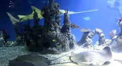 The Deep - Hull's Submarium - Manta Rays