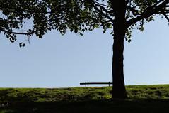 DSC_9122 sunny day - urban photography