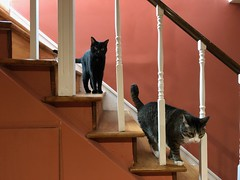 #cats on stairs