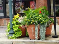 Street Corner Planters