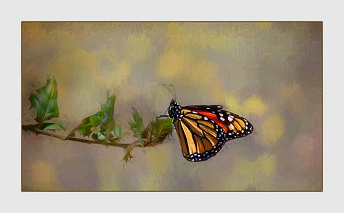 The Elusive Butterfly