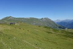 Pasture @ Hike to Col de la Fenêtre & Lacs Jovet