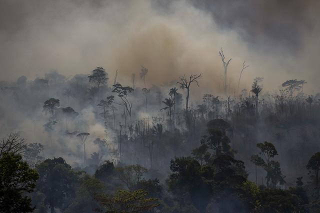Queimadas na Amazônia não são naturais e têm impacto global, afirma pesquisador