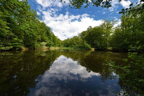 Reflets sur l'étang Gründel