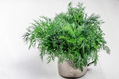 Fresh dill in an iron mug on a white wooden background