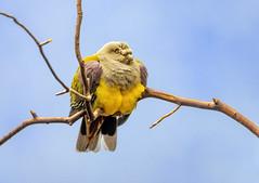 An unknown bird.