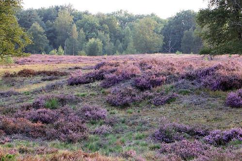 Strabrechtse Heide Heeze