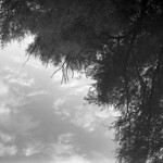 Skadarian Reflections  (Acros Neopan 100)