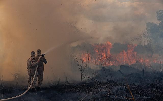 Comitê referendado por papa denuncia queimadas na Amazônia em corte internacional