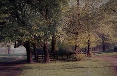 wimbledon common