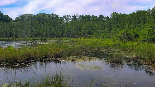 Beulah Bog State Natural Area