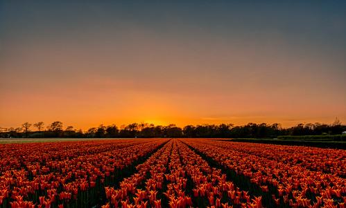 The Colour Orange Sleeping.