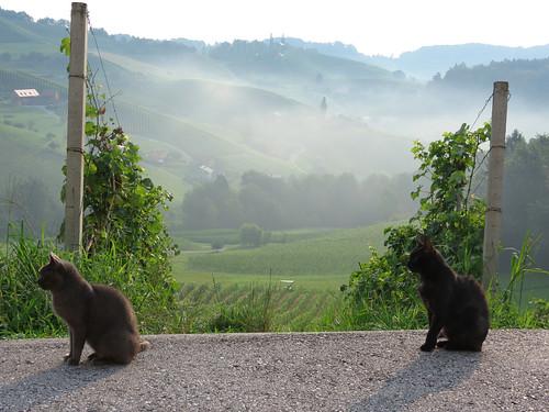 Svečina (Slovenia)