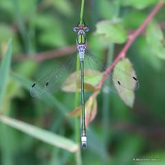 2 - Spreadwings