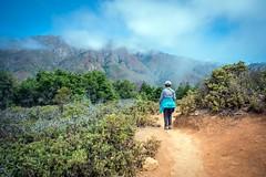 _WCB7581 Big Sur- Buzzard's Roost hike