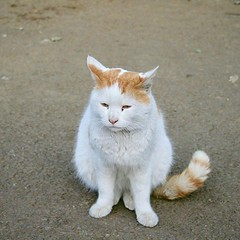 #cat #猫 #ネコ #ねこ #alleycat #野良猫 #日本 #Japan #東京 #Tokyo #Katze #chat #кошка #KAT #gato #Kucing #Кіт #แมว #Köttur #kissa #котка #Mèo #Kot #고양이 #貓 #kočka #kass #муур #pisica