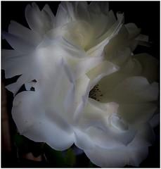 White light...HSS