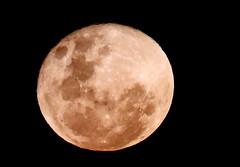 scarborough moon, 2019 (9)