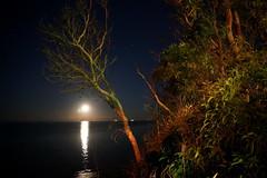 scarborough moon, 2019 (4)