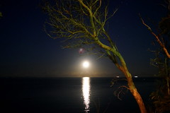 scarborough moon, 2019 (3)