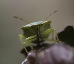 Bugs, Insects and macro