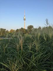 20190901_Donaupark_024