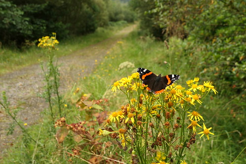 Our butterfly lined way through Union Wood