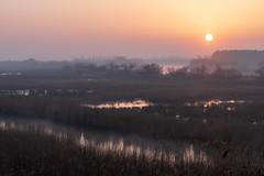 Misty Morning Camargue Version