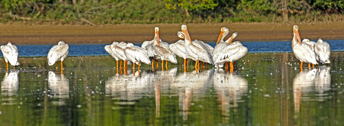 Pelican Terry Lake Summer 2019 DSC_6565