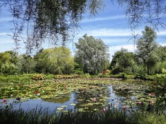 Lily Pond at Bennetts