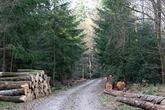 Forêt domaniale de Breuil-Chenue