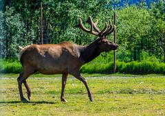 Alaska Wildlife Conservation Center_1