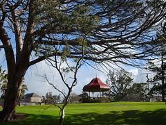 Rotunda Under Tree