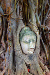 Image by Bruno Tartaglione (184060075@N02) and image name THE ENIGMATIC SMILE OF BUDDHA photo  about Buddha Head in Tree Roots, shot at Wat Mahathat, Ayutthaya, Thailand 31 July 2014. The ancient temple was built around 14th century but was reduced to ruins in 1767 during the invasion of Ayutthaya by the Burmese army. The invaders vandalized many of the Buddha images and cut Buddha heads off. Proba
