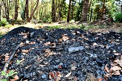 biochar pile in forest
