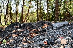 biochar pile in forest - 2
