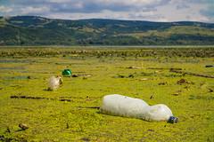 Plastikflasche treibt auf dem Wasser. Symbolfoto für Umweltverschmutzung