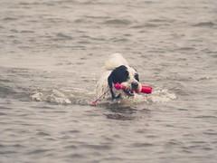 Water Dog | 4. September 2019 | Fehmarn - Schleswig-Holstein - Deutschland