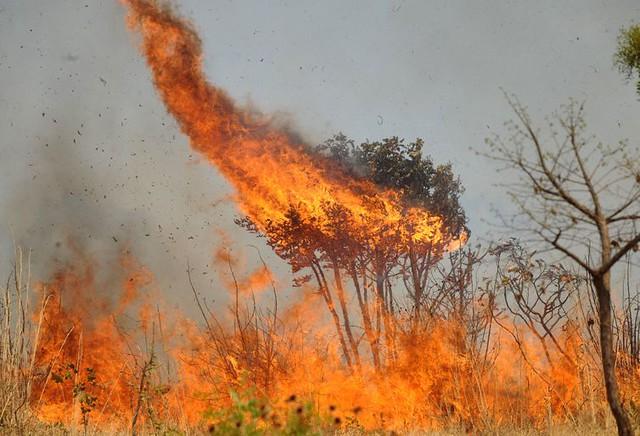 Agroecologia é contraponto às queimadas na produção agrícola